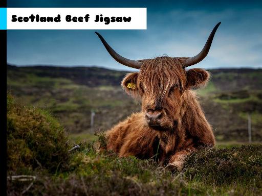 Scotland Beef Jigsaw