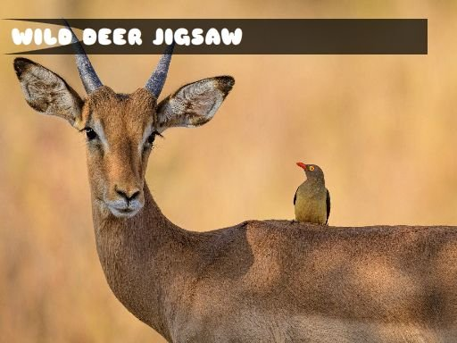 Wild Deer Jigsaw