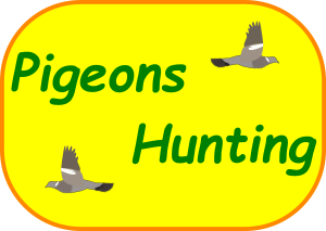 Pigeons Hunting